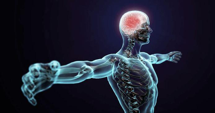 Legaturile stranse dintre corp si minte